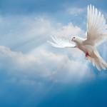 Allontanamento piccioni Roma e dintorni